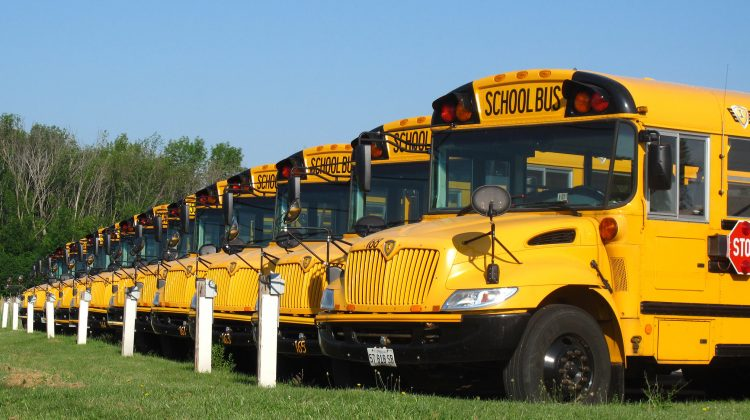 A row of bright yellow school busses